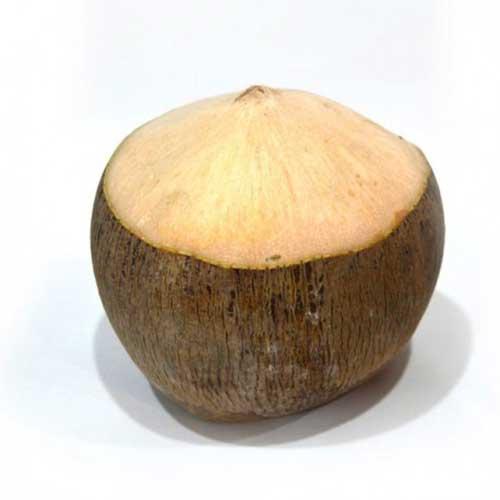 نارگیل تایلندی(کوکوریکو)