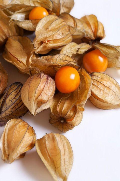 میوه های استوایی: فیسالیس