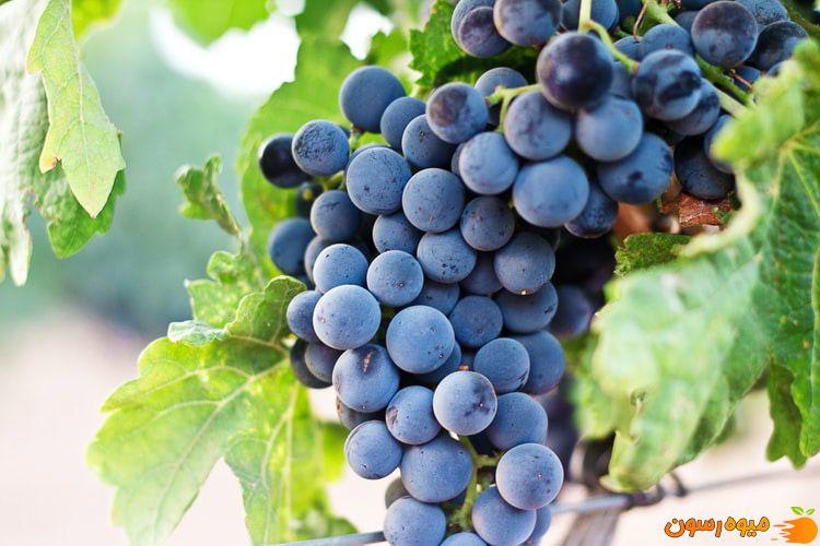 انگور از میوه های مفید برای معده